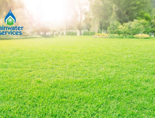 Top 10 Tips to Keep Your Lawn Green